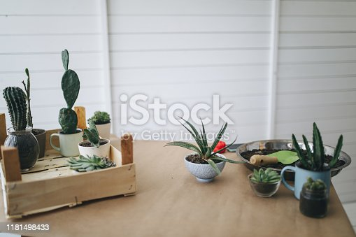 Cactus pots on a table