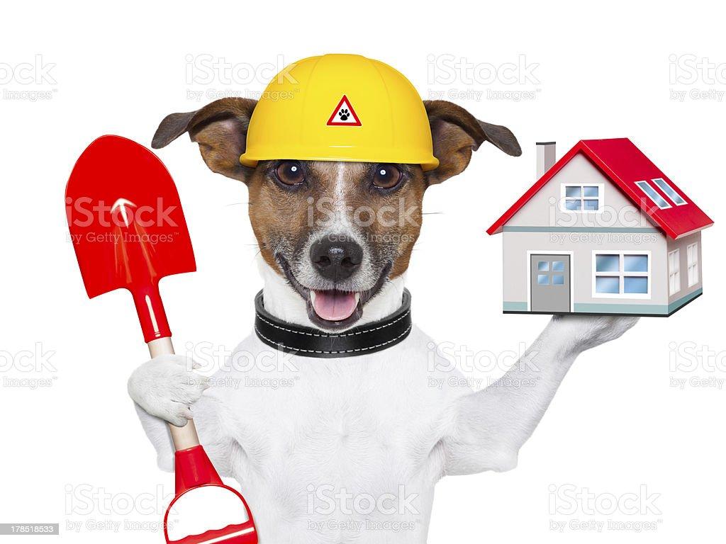 home dog builder stock photo
