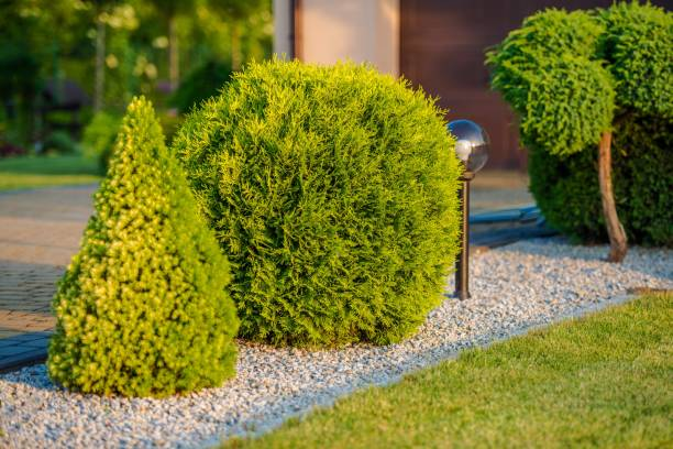 Home Front Garden Plants Home Front Decorative Garden Plants Closeup Photo. Gardening Theme. war effort stock pictures, royalty-free photos & images