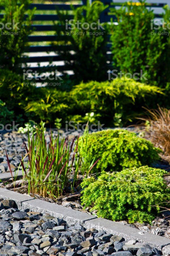 Home garden design detail, green evergreen plants on rocks background.
