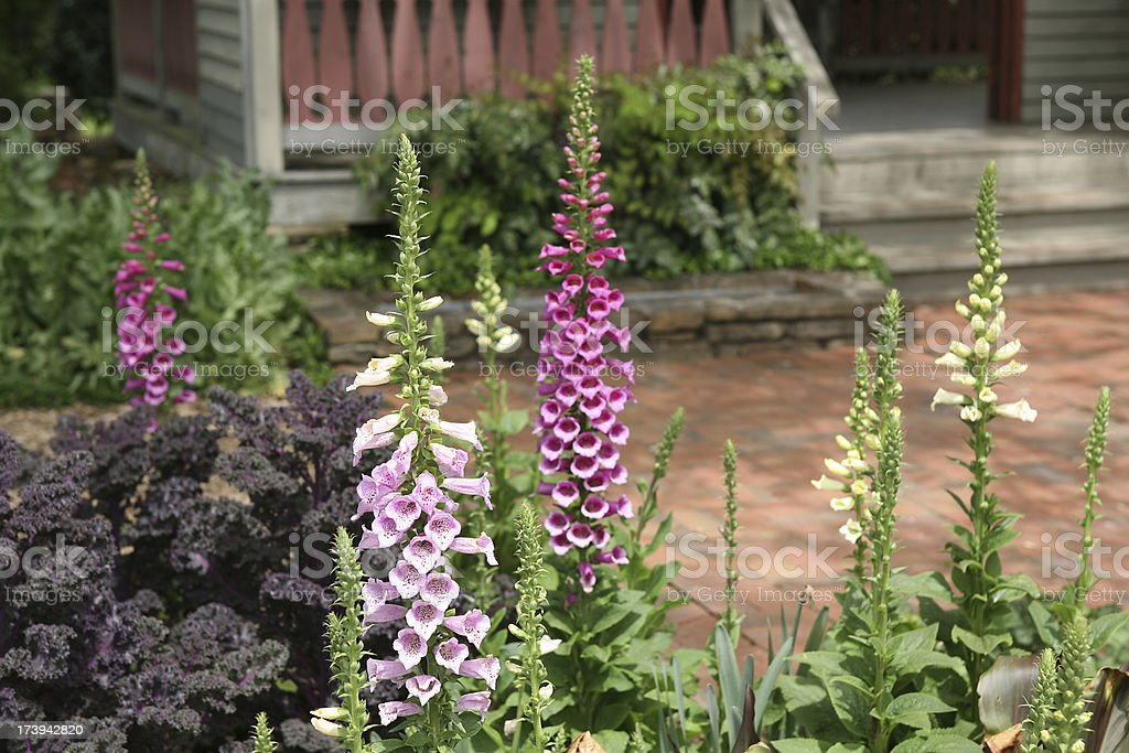 home garden stock photo