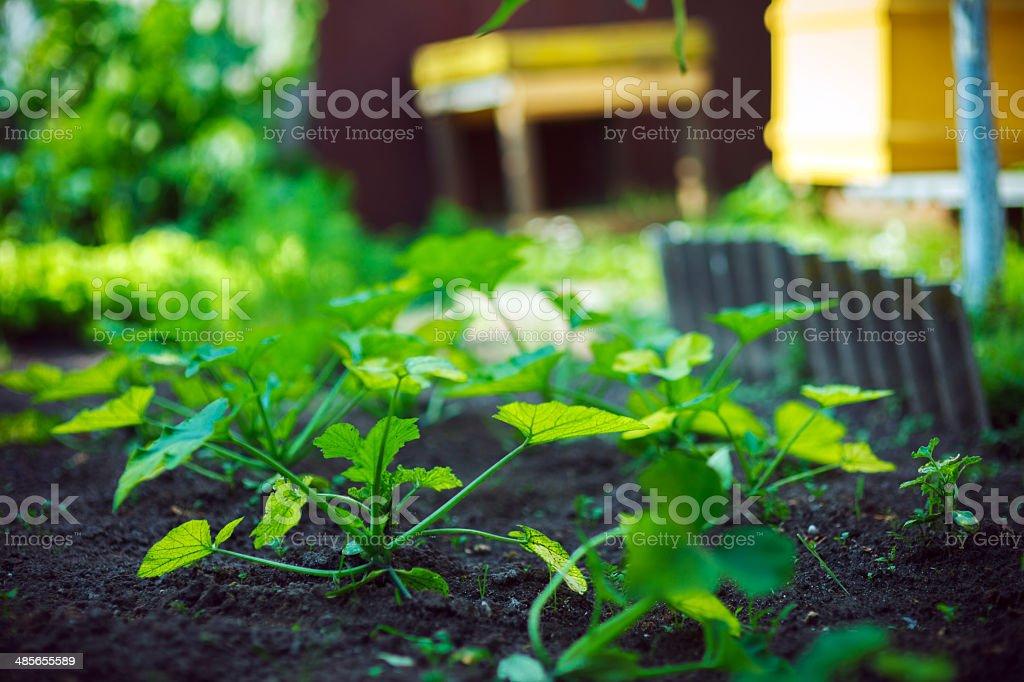 Home garden royalty-free stock photo