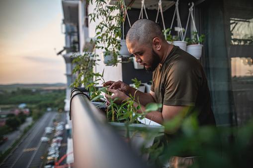 Home gardening at balcony