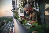 istock Home gardening at balcony 1227084632