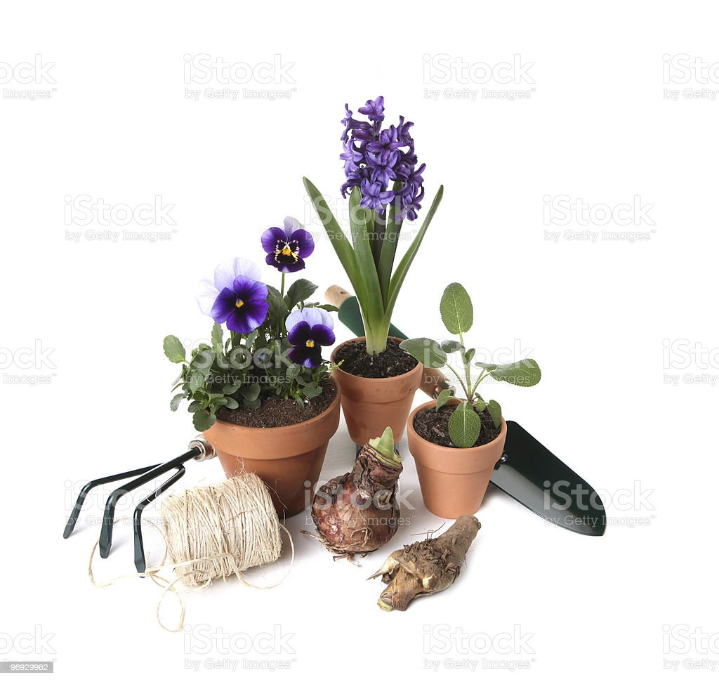 Home Gardening Essentials royalty-free stock photo