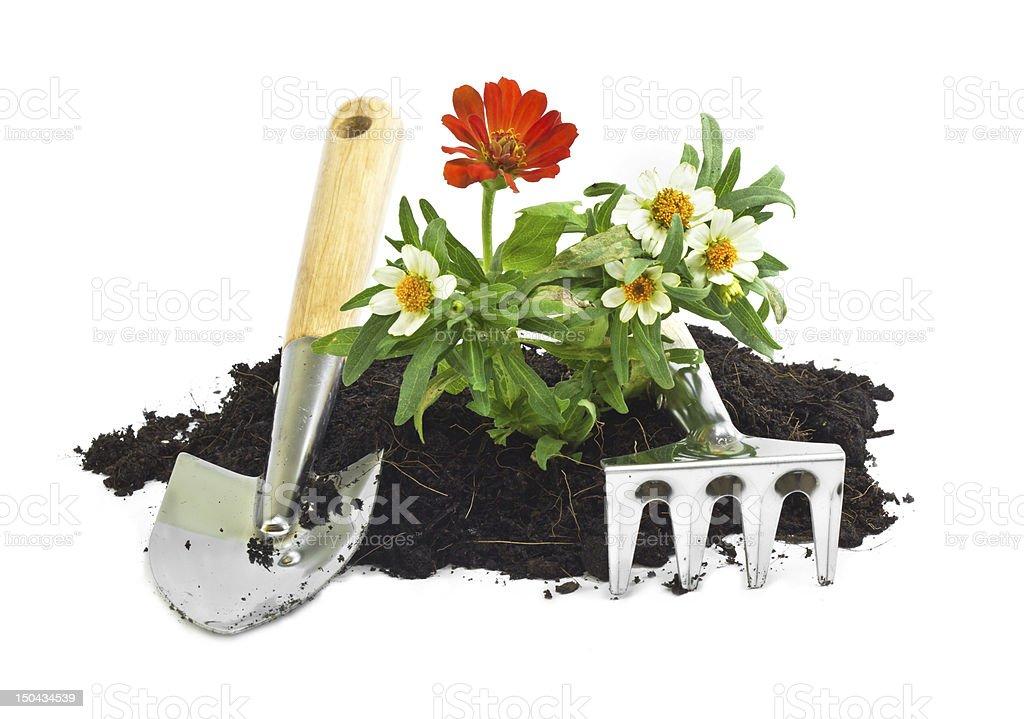 home gardening stock photo