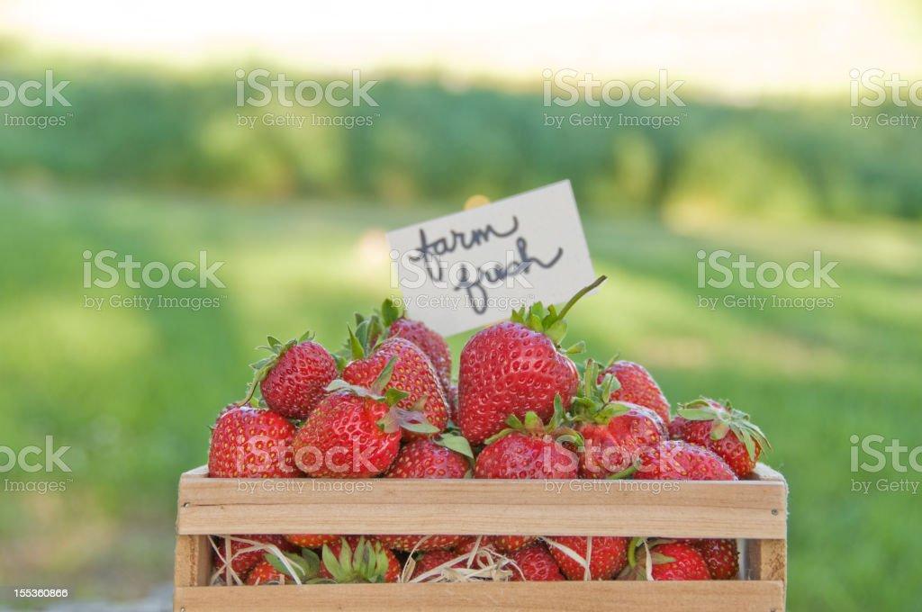 Home grown organic strawberries royalty-free stock photo