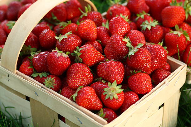Home Grown Strawberries in Wooden Basket  fruit carton stock pictures, royalty-free photos & images