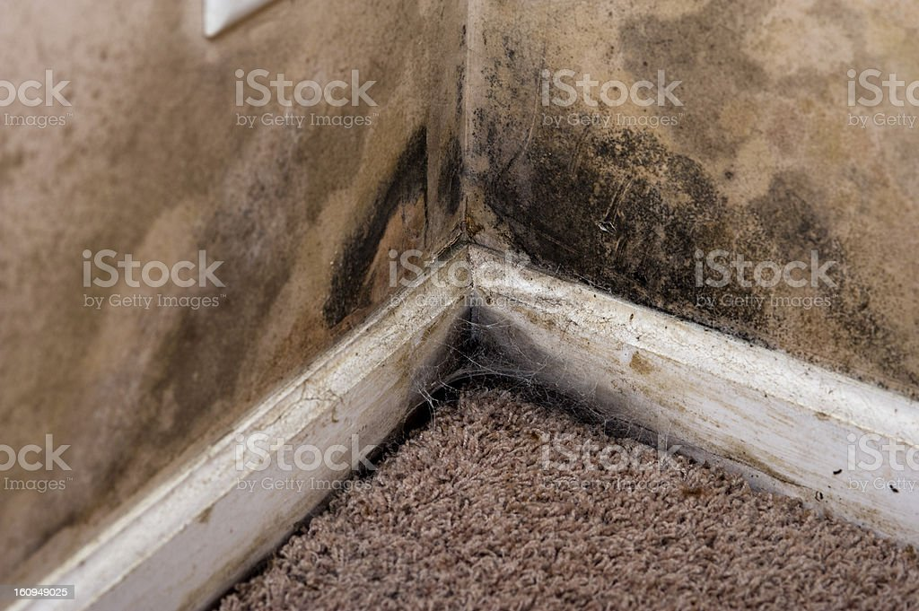 Home interior Black Mold on basement wall stock photo