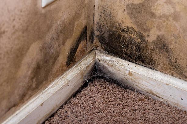 home interior black mold on basement wall - meeldauw stockfoto's en -beelden