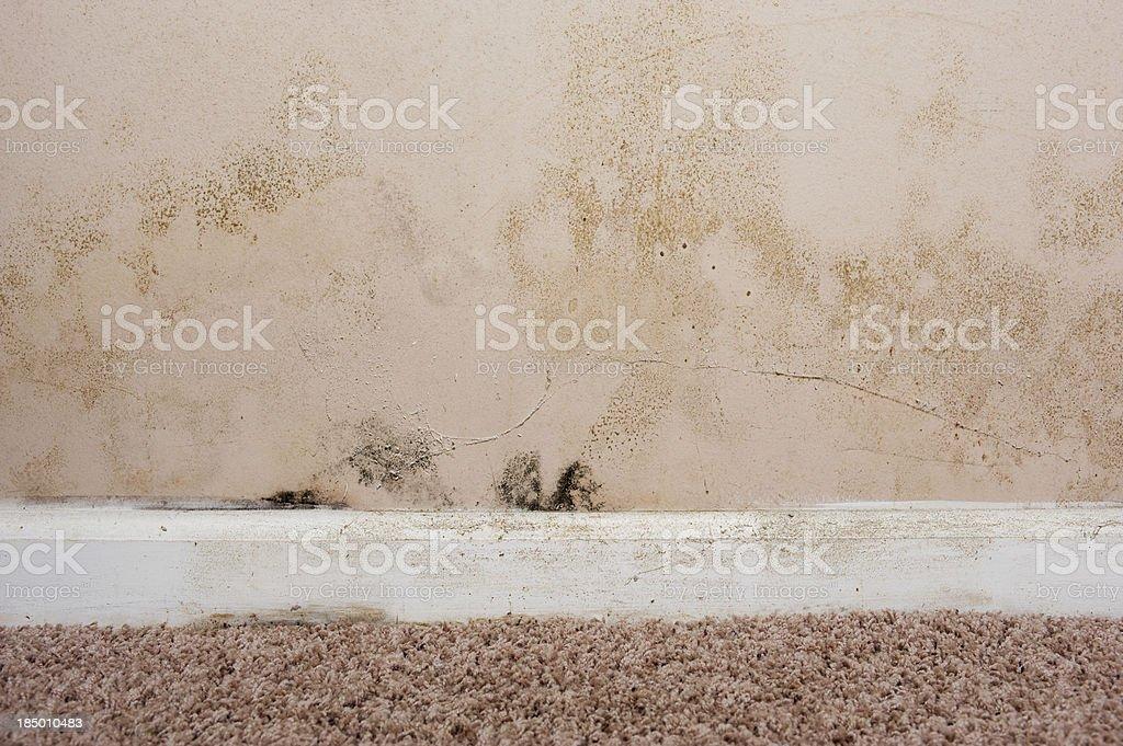Home interior Mold on basement wall royalty-free stock photo