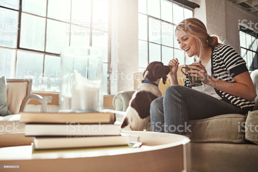 Home is where the dog is stock photo