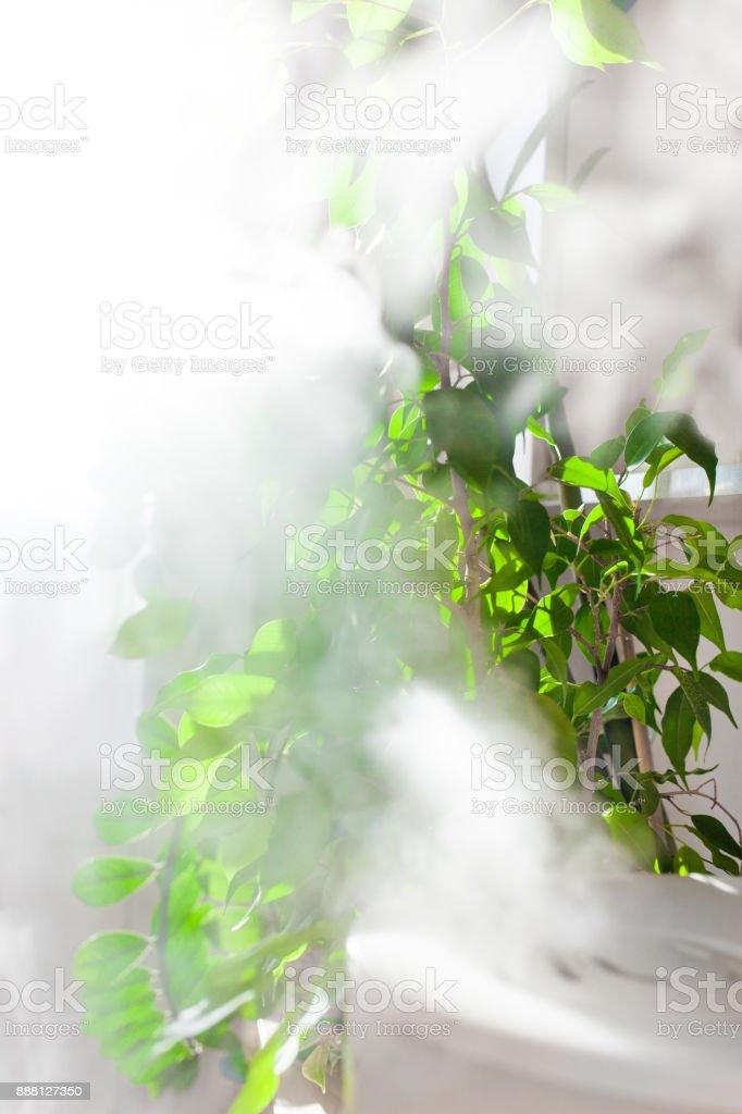 Home microclimate stock photo
