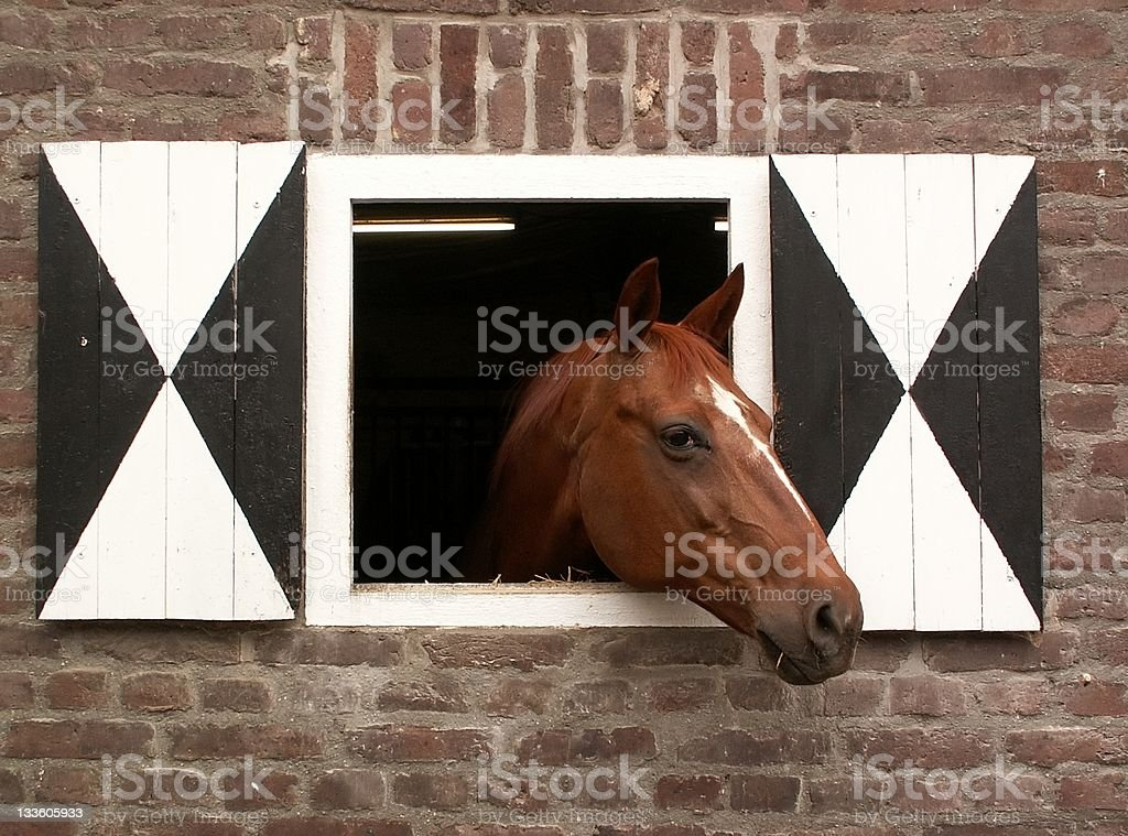 home of the horse royalty-free stock photo