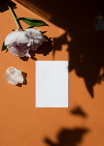 Home office desk. Female workspace with blank white a5 paper mockup, peony flower, light and shadow on a ginger background. Flat lay, top view. Branding identity. Add your text.