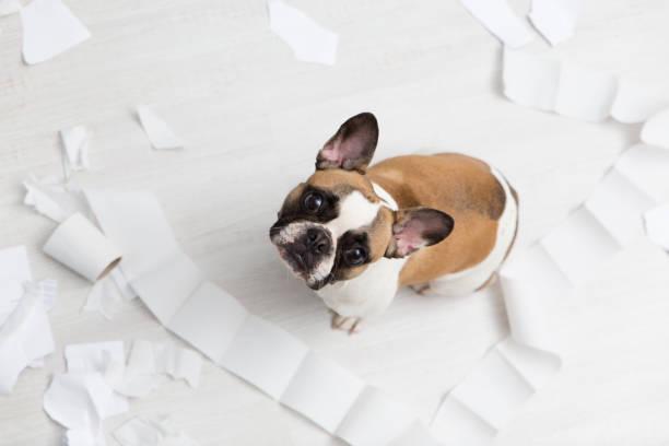 Home pet destruction on white bathroom floor with some piece of pet picture id908175384?b=1&k=6&m=908175384&s=612x612&w=0&h=lwyz5ev4pt xdiekp 4rq4kkbmvydaxpue lsyjspto=