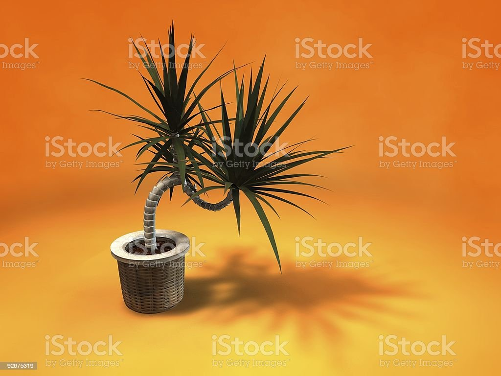 Home plant in pot Isolated on orange royalty-free stock photo