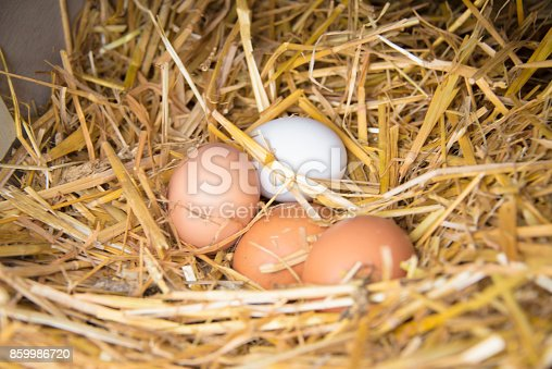 Eco-friendly organic eggs in a nest made of hay. Free range chicken eggs