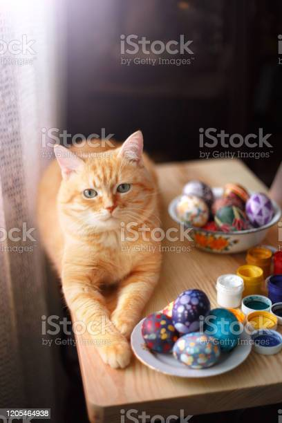 Home red cat and easter eggs on the table picture id1205464938?b=1&k=6&m=1205464938&s=612x612&h=iyxbpody du786jht4a89oo4tw8pogzuphzckuw1bhw=