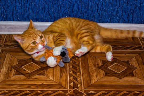 Home red cat plays with a toy picture id641651818?b=1&k=6&m=641651818&s=612x612&w=0&h=idi bbx1n0bakjdeabso6wwpvm5m3auy2nfvcwbtwiq=