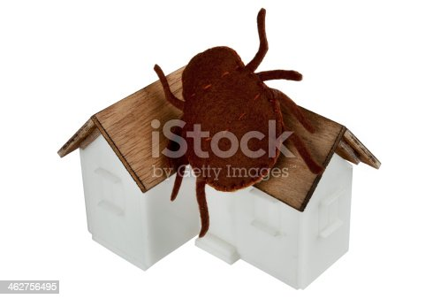 home roof bug