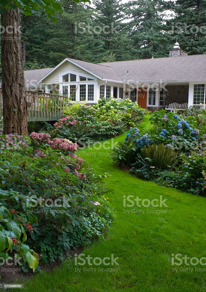 home surounded by Hydrangea gardens stock photo