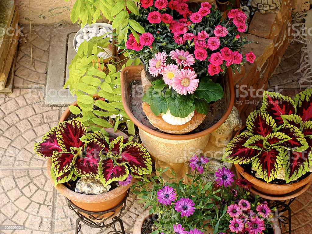Home various flowers in pots. Design Italian courtyards stock photo