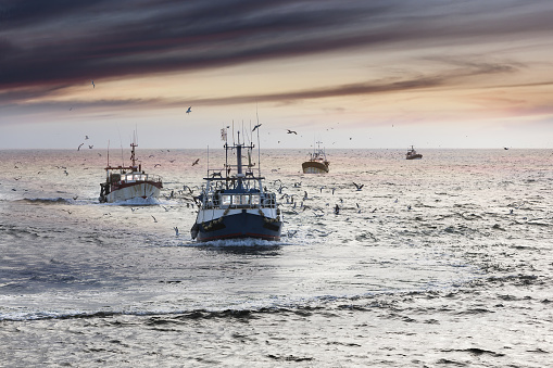 Homecoming: Tired fishermans ships approaching after a hard day, Le Guilvinec,Brittany, France