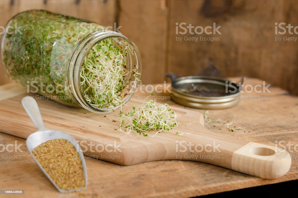 Homegrown Alfalfa Sprouts Horizontal with Copy Space stock photo