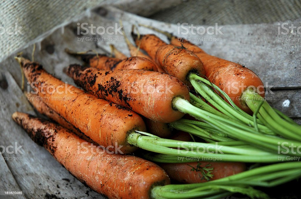 Homegrown Carrots stock photo