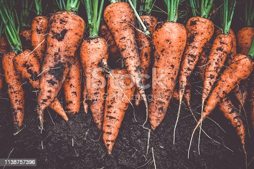 Carrot slices isolated on white background. Flat lay. Top view