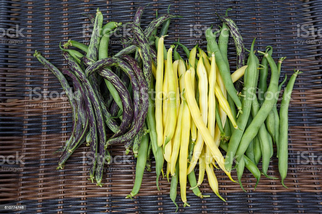 homegrown green haricot beans stock photo