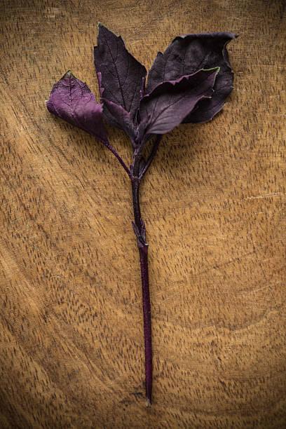 einheimischen kräutern - ocimum tenuiflorum stock-fotos und bilder