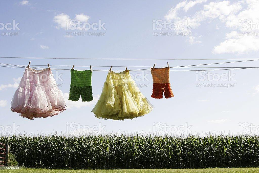 Homegrown series stock photo