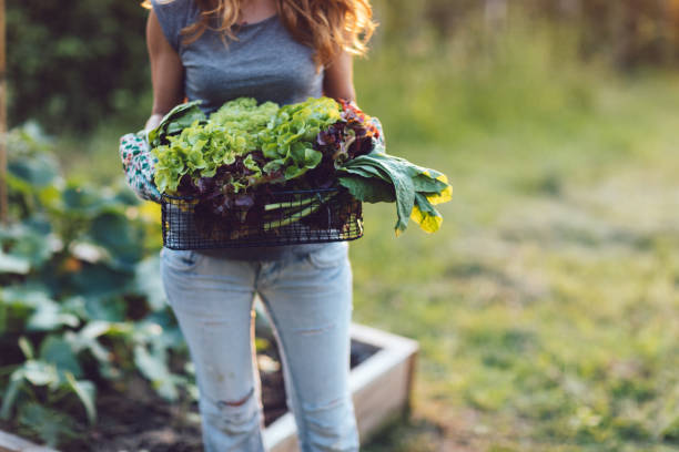 Homegrown Vegetables, Healthy Vegan Lifestyle stock photo