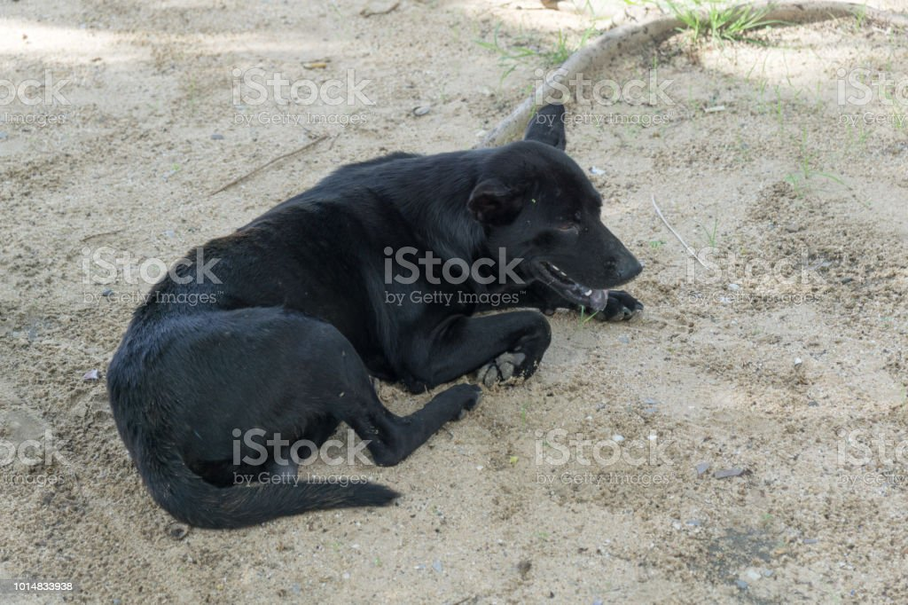 Sem abrigo cachorro preto no chão - foto de acervo