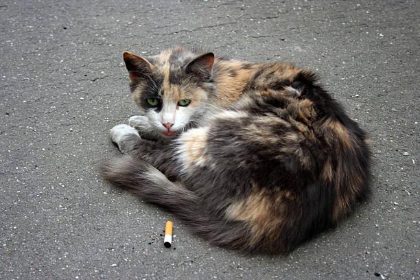 Homeless Cat and Cigarett stock photo