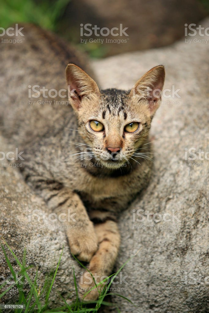 homeless cat lays on a stone stock photo