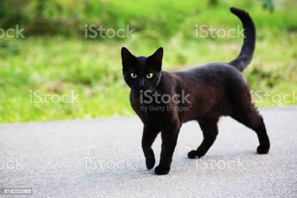 Homeless cat on the street picture id816253988?b=1&k=6&m=816253988&s=612x612&h=vnhs zllet1hts hwfxxrio1ikudmhd67r5 twzwohy=