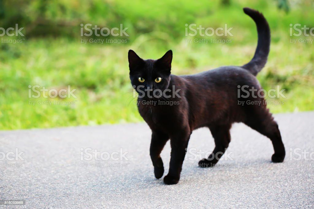 Homeless cat on the street stock photo