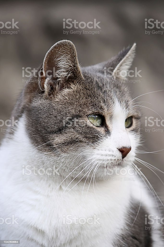 Homeless cat royalty-free stock photo