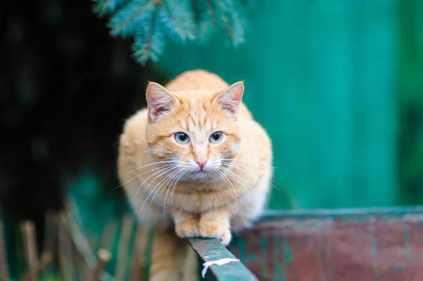 Homeless cat picture id522021457?b=1&k=6&m=522021457&s=612x612&w=0&h=dgek1foom4eebwtetef1w3vw t5nlr3vbs1bqrsubmi=