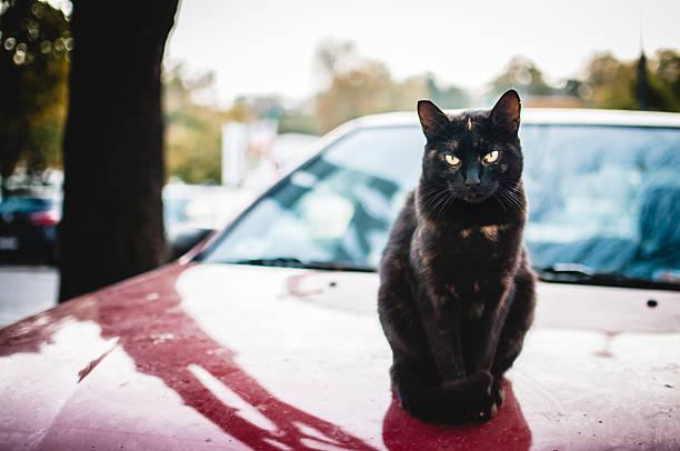 Homeless cat picture id620988116?b=1&k=6&m=620988116&s=612x612&w=0&h=2qchow r8sjg4nykmkyllv3hyw13evjqnrlxvwtmehi=