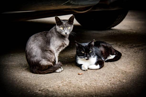 homeless cat - batalina cats стоковые фото и изображения