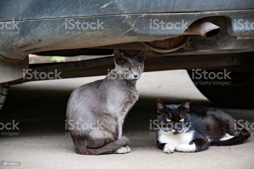 Homeless cat стоковое фото