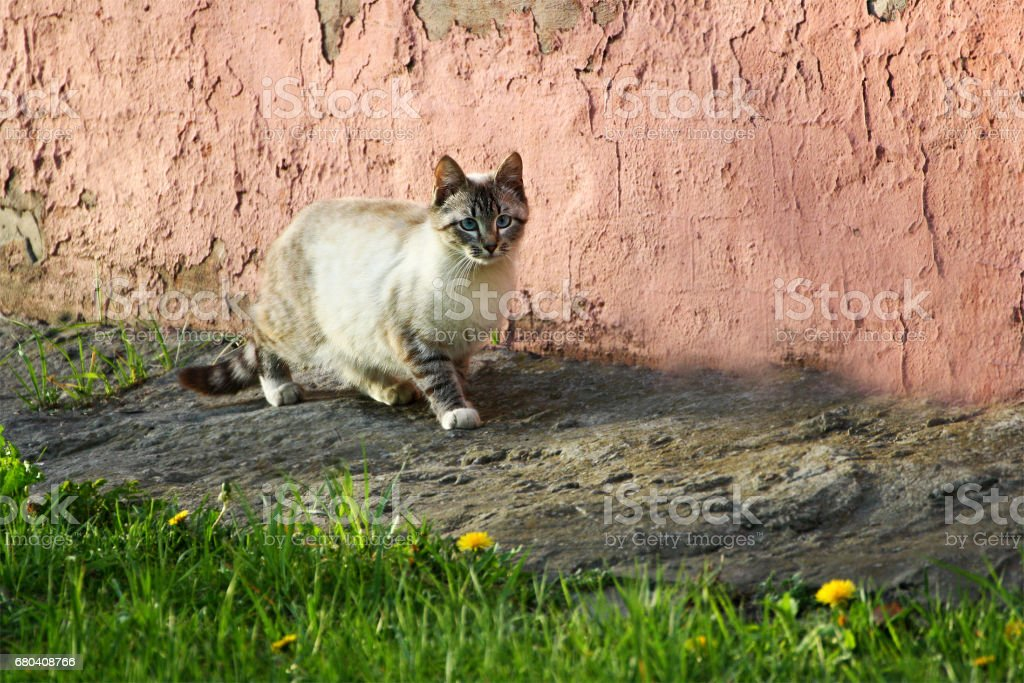 Homeless cats in nature stock photo