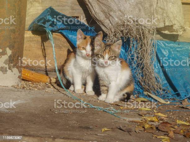 Homeless cats need a new home baby stray cats picture id1159823067?b=1&k=6&m=1159823067&s=612x612&h=epac6hcmn8jyyhwfvt0rwgionbi9kxbdf zrqqzvfnc=