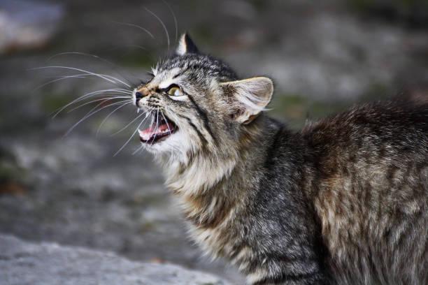 Homeless cats picture id857432752?b=1&k=6&m=857432752&s=612x612&w=0&h=ly3kci3eu w0kmngxu8ou15c6df mjaopc9gkpkpt7y=