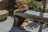 Homeless cats rest from the heat in the shade