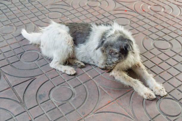 Sem-teto cachorrão na rua - foto de acervo